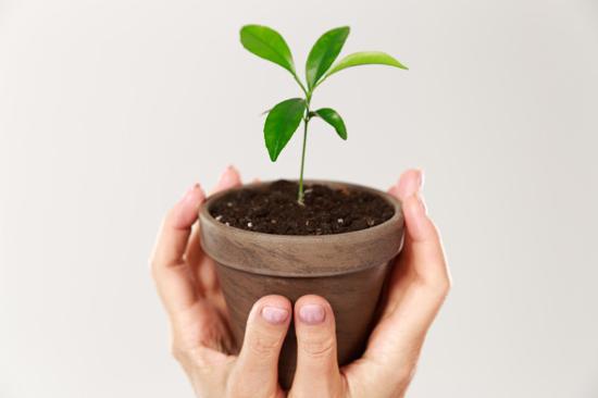 plante-verte-noel-ecoresponsable